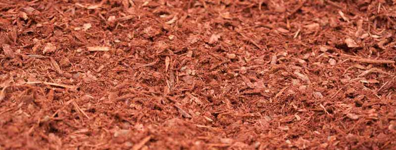 Coastal Red Fir Bark